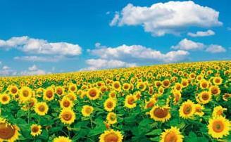 Ukraine nature